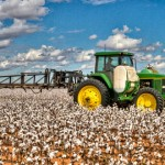 Spraying Cotton