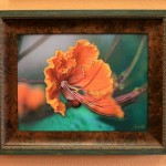 Pride of Barbados - Drawing In Framed