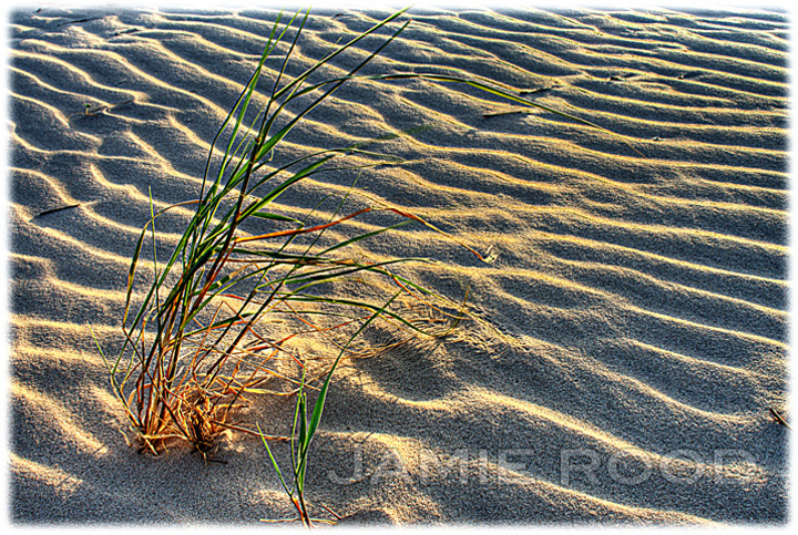 Grass on the Dune