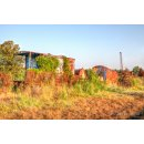Doghouse Sunrise